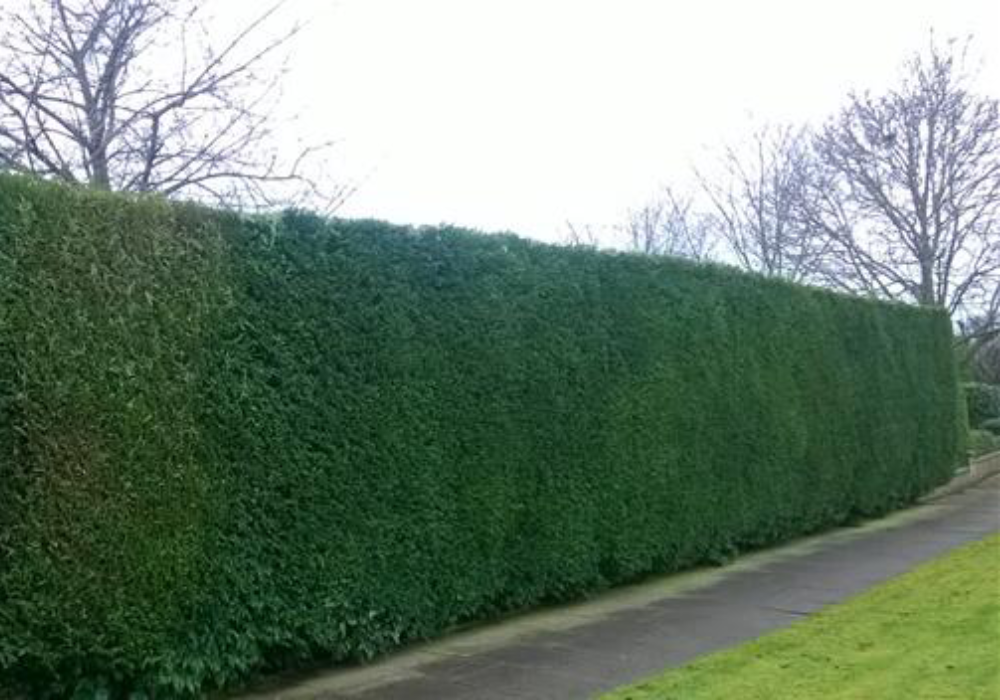 Tree & Hedge Services Northampton